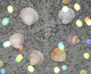 Conchas círculo